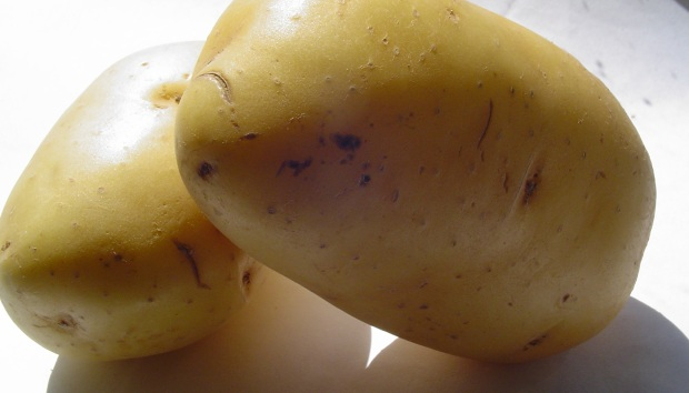 Spuds you like? (c) R Dennison June 2013